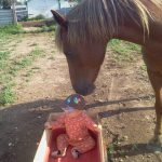 And quiet kids pony, all in one