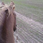 My beautiful fall colored pony
